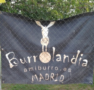 Burrolandia: www.amiburro.es